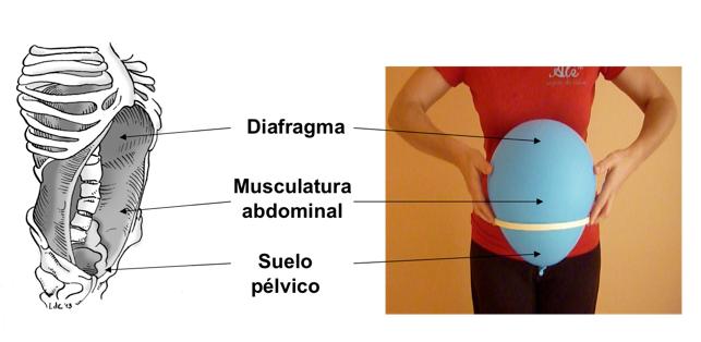Suelo pelvico 3