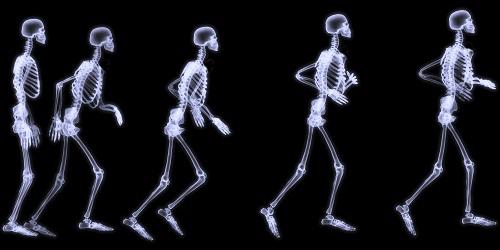 Esqueleto 1