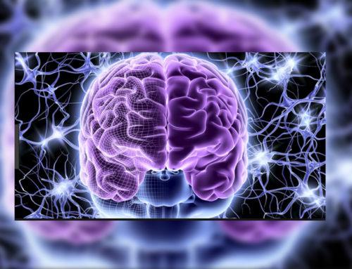 7 pilares para unas neuronas sanas