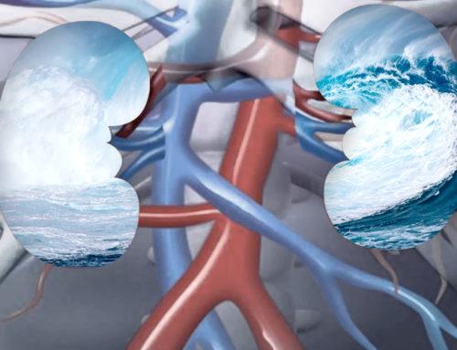 El riñón, almacén de la energía vital